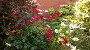 Garden Across the road