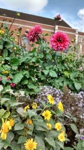 Huge flowers in one of  the Garden's in the Inns of Court