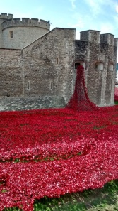 Fountain of  poppies