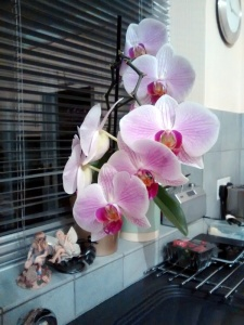 Light Pink Orchid
