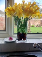 My vase of  Daffs