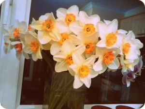 My Lovely Daffodils