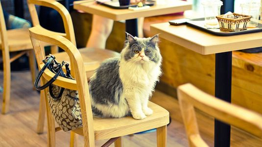 catcafe-0