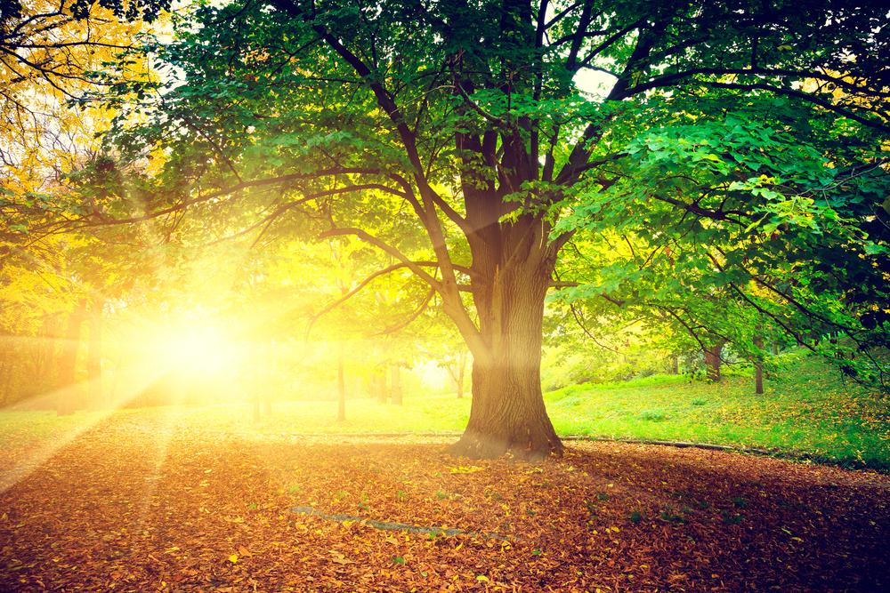 shutterstock_139765534-woodlands-in-sun