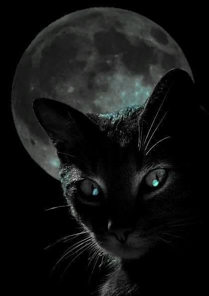 black-cat-at-night-source-catboxzen-com_
