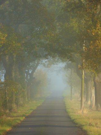 foggy-morning-019.jpg